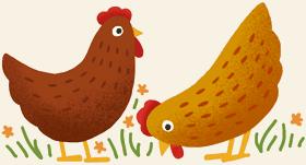 Chicken Illustration For Decoration